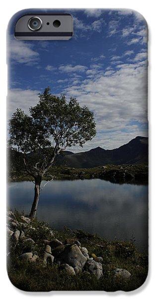 Norway Pyrography iPhone Cases - Tree iPhone Case by Evaldas Slizauskas