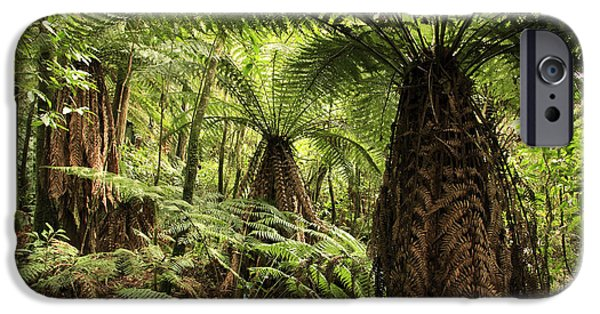 Forest iPhone Cases - Tree ferns iPhone Case by Les Cunliffe