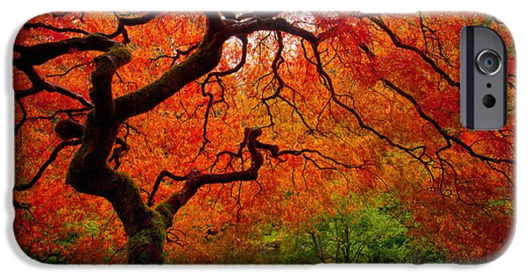 Fall Season iPhone Cases - Tree Fire iPhone Case by Darren  White