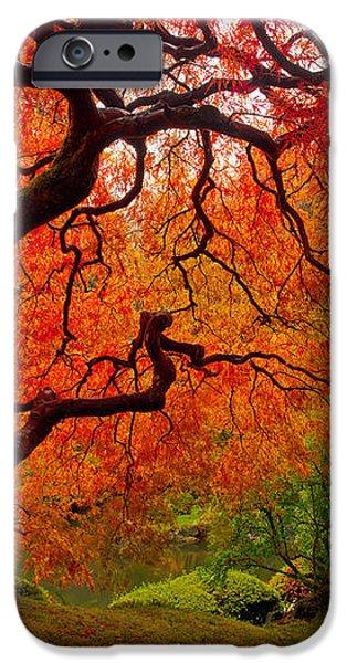 Tree Fire iPhone Case by Darren  White