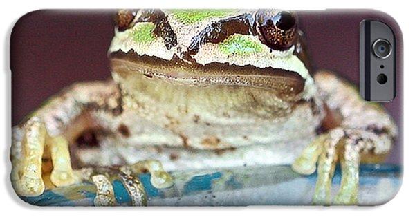 Jeannoren iPhone Cases - Tree Frog iPhone Case by Jean Noren