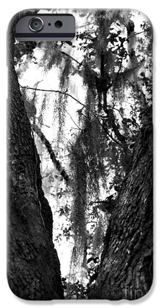 I Love America iPhone Cases - Tree Heart iPhone Case by John Rizzuto