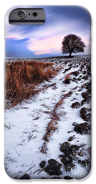 Fresh Snow iPhone Cases - Tree in a field  iPhone Case by John Farnan
