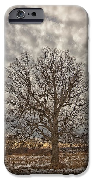 Winter Storm iPhone Cases - Tree In A Rural Field After A Snowstorm iPhone Case by Robert Postma