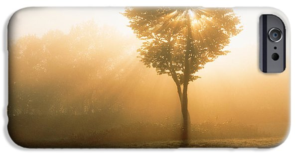 Mist iPhone Cases - Tree In Early Morning Mist iPhone Case by Panoramic Images