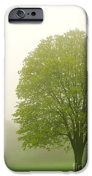 Tree in fog iPhone Case by Elena Elisseeva