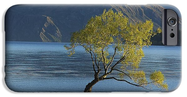 Autumn iPhone Cases - Tree in Lake Wanaka iPhone Case by Stuart Litoff