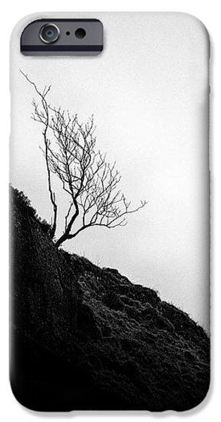 Tree in mist iPhone Case by John Farnan