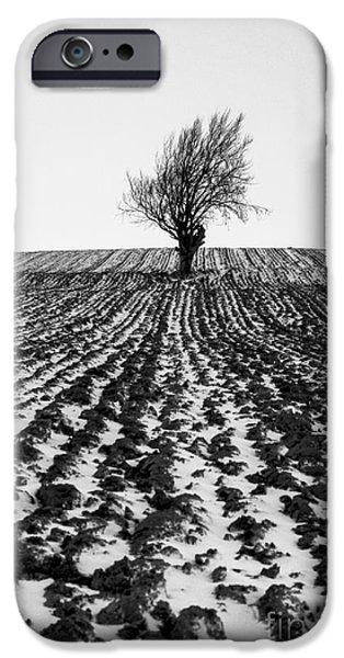 Fresh Snow iPhone Cases - Tree in snow iPhone Case by John Farnan