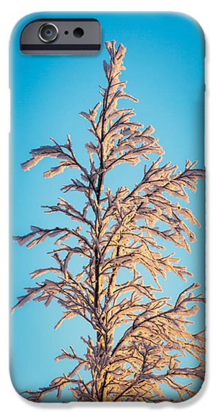 Lapland iPhone Cases - Tree In The Frozen Landscape, Cold iPhone Case by Panoramic Images