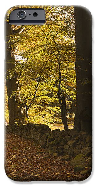 Tree Lined Road Covered With Fallen iPhone Case by John Short