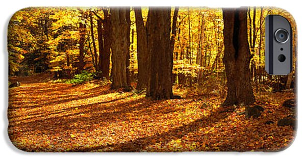 Pathway iPhone Cases - Tree Lined Road, Massachusetts, Usa iPhone Case by Panoramic Images