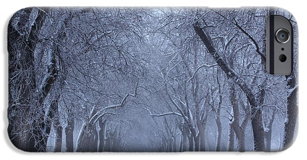 Monotone iPhone Cases - Tree Lines iPhone Case by Eric Glaser