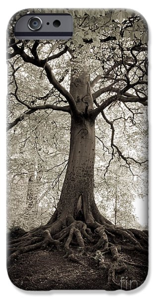 Tree of Life iPhone Case by Dominique De Leeuw