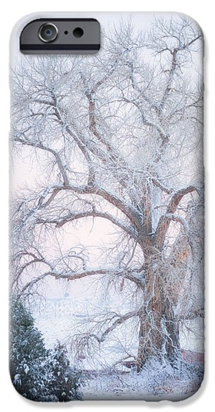 Winter Trees Photographs iPhone Cases - Tree of Snow iPhone Case by Darren  White