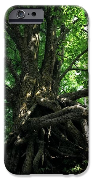 Tree Roots Digital iPhone Cases - Tree on Pierce Stocking Scenic Drive iPhone Case by Michelle Calkins