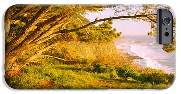 Big Sur California iPhone Cases - Tree On The Coast, Big Sur, California iPhone Case by Panoramic Images