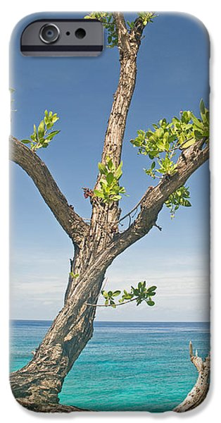 Overhang iPhone Cases - Tree Overhanging Sea At Xtabi Hotel iPhone Case by Panoramic Images