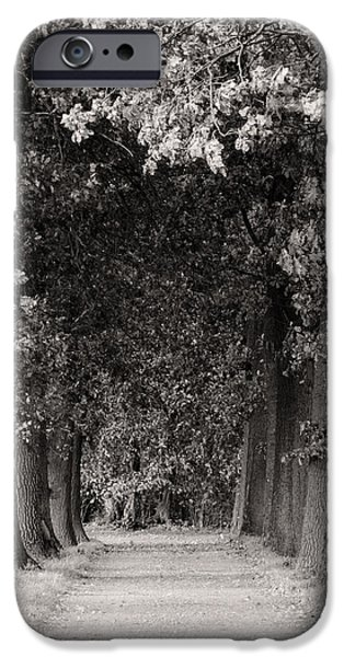 Toning iPhone Cases - Greeted by Trees iPhone Case by Wim Lanclus
