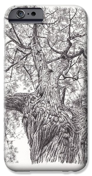 Tree Roots Drawings iPhone Cases - Tree pen drawing 1 iPhone Case by Heidi Vormer