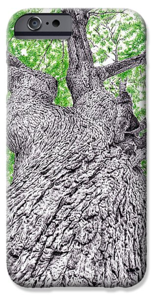 Photorealistic iPhone Cases - Tree pen drawing 4 iPhone Case by Heidi Vormer