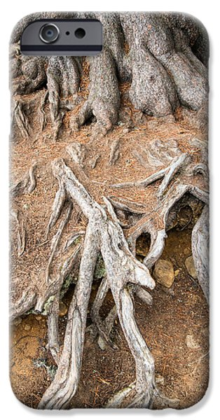 Brown Swiss iPhone Cases - Tree root iPhone Case by Matthias Hauser