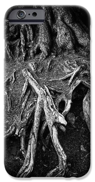 Tree Roots iPhone Cases - Tree roots black and white iPhone Case by Matthias Hauser