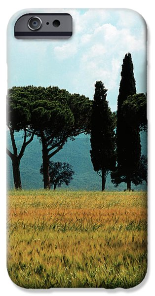 Tree Row in Tuscany iPhone Case by Heiko Koehrer-Wagner