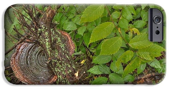 Creepy iPhone Cases - Tree Saucer 1 iPhone Case by Deborah Smolinske