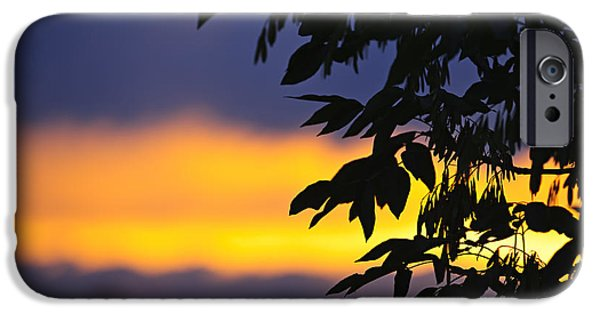 Setting Sun iPhone Cases - Tree silhouette over sunset iPhone Case by Elena Elisseeva
