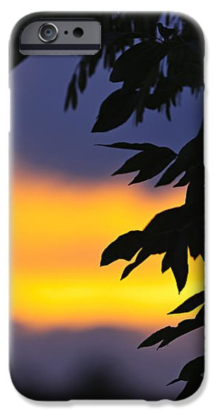 Tree silhouette over sunset iPhone Case by Elena Elisseeva