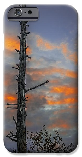 Unset iPhone Cases - Tree Silhouette iPhone Case by Paul Freidlund