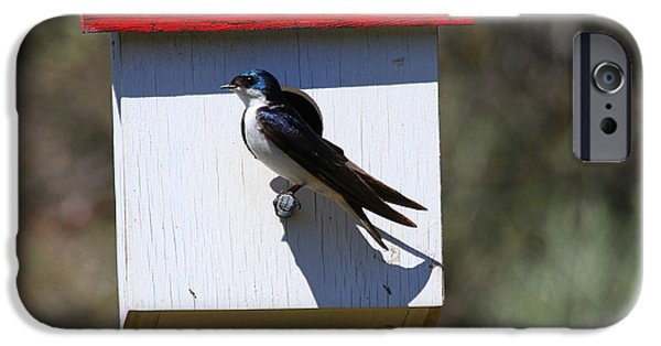Swallows iPhone Cases - Tree Swallow Home iPhone Case by Mike  Dawson