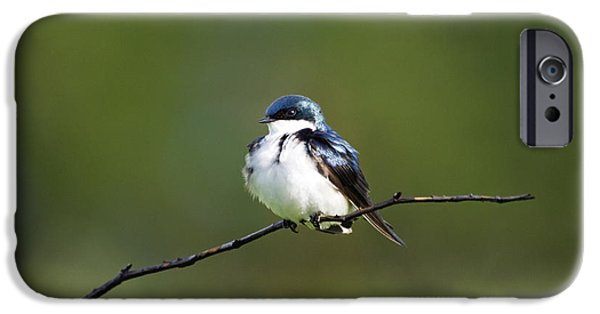 Indiana Springs iPhone Cases - Tree Swallow III - D009016 iPhone Case by Daniel Dempster