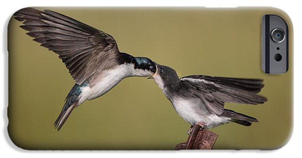 Baby Bird Pyrography iPhone Cases - Tree Swallows Feeding iPhone Case by Daniel Behm