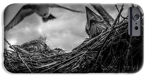 Swallows iPhone Cases - Tree Swallows in nest iPhone Case by Bob Orsillo