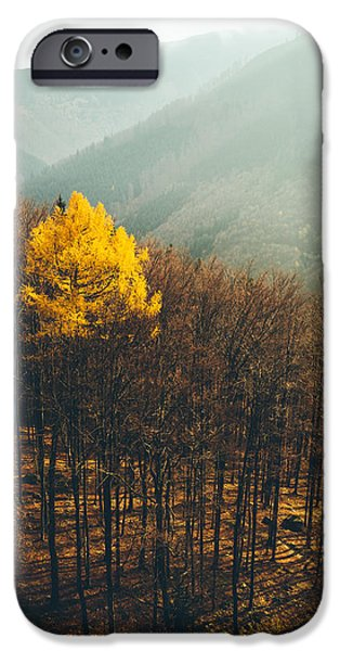 Forest iPhone Cases - Tree iPhone Case by Tomas Hudolin