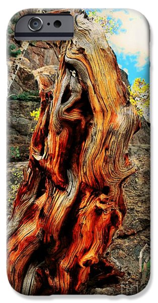 Struckle iPhone Cases - Tree Trunk iPhone Case by Kathleen Struckle