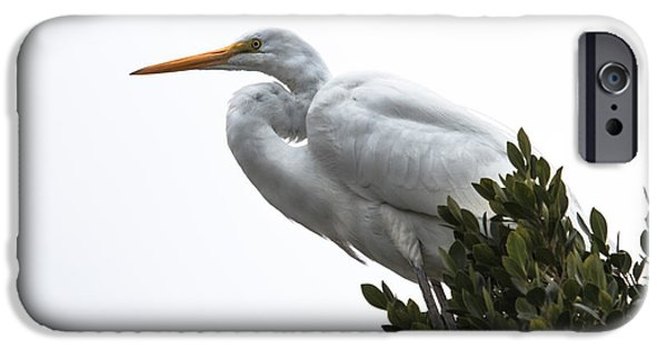 Haybale iPhone Cases - Treed Egret iPhone Case by Robert Bales