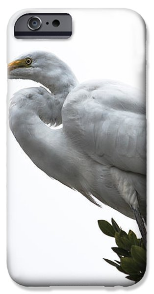 Treed Egret iPhone Case by Robert Bales