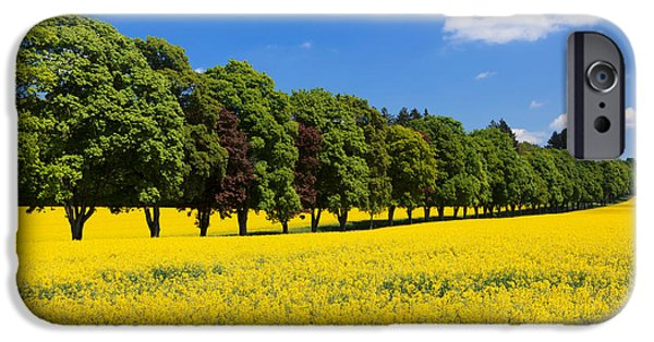 Rape iPhone Cases - Treelined In An Oilseed Rape Field iPhone Case by Panoramic Images