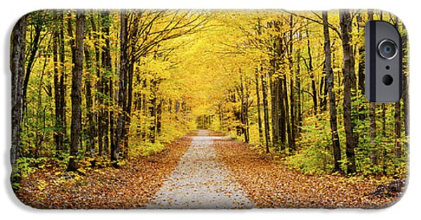 Pathway iPhone Cases - Trees Along A Pathway In Autumn iPhone Case by Panoramic Images