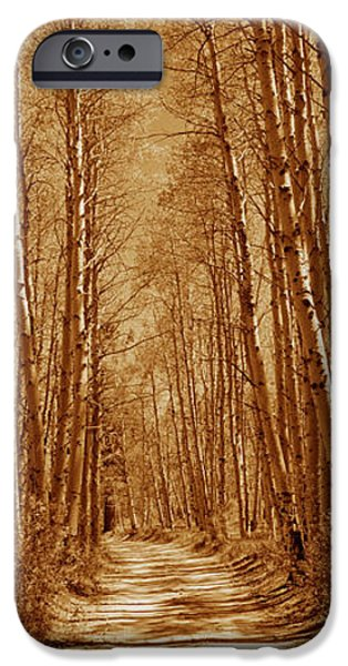 Log Cabins iPhone Cases - Trees Along A Road, Log Cabin Gold iPhone Case by Panoramic Images