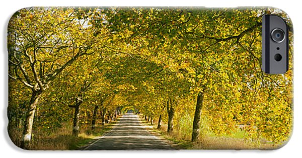 The Way Forward iPhone Cases - Trees Along The Road, Portugal iPhone Case by Panoramic Images