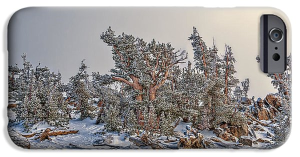 Snow Scene iPhone Cases - Trees and Rocks iPhone Case by Maria Coulson