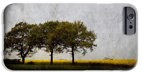 Trio iPhone Cases - Trees at Sunrise iPhone Case by Carol Leigh