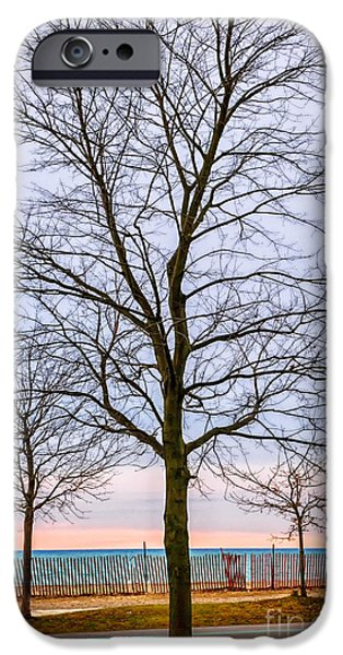 Trees at the Boardwalk in Toronto iPhone Case by Elena Elisseeva