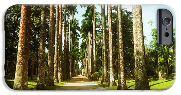 Pathway iPhone Cases - Trees Both Sides Of A Garden Path iPhone Case by Panoramic Images