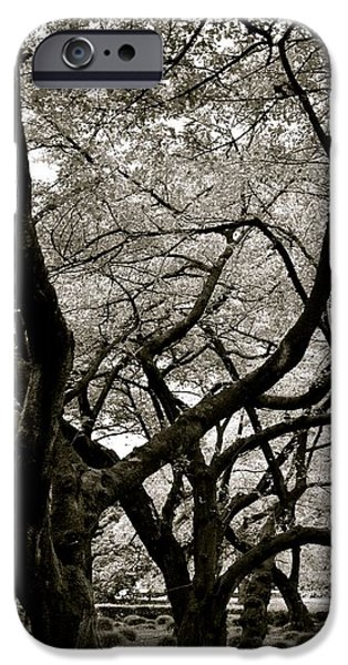Shinjuku iPhone Cases - Trees iPhone Case by Corinne Rhode