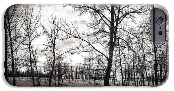 Tree Art Print iPhone Cases - Trees iPhone Case by Ian MacDonald